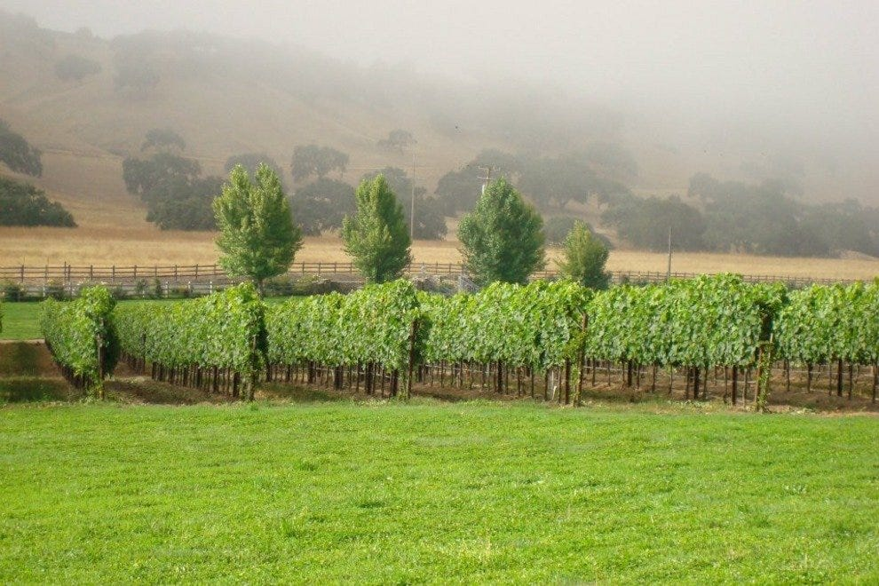Settle in for some scenic wine tasting at Rusack Vineyards, just outside of downtown Solvang