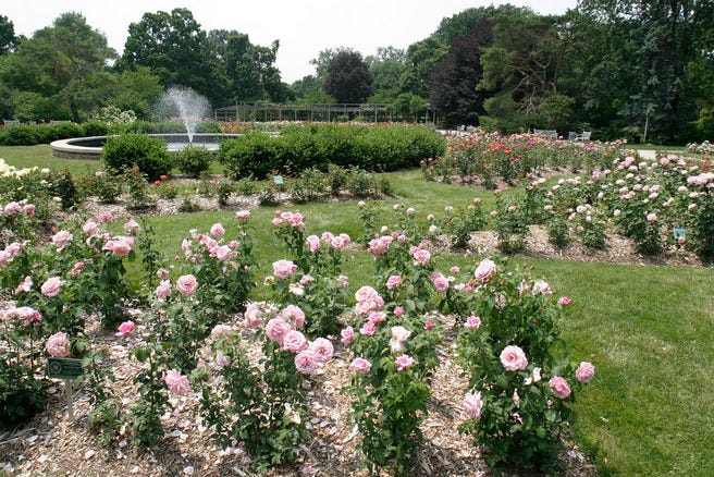 10best Beautiful Rose Gardens Features Photo Gallery By