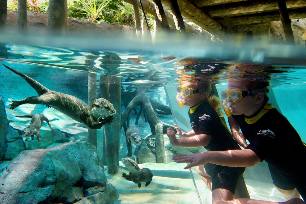 Hotels Near Discovery Cove Florida