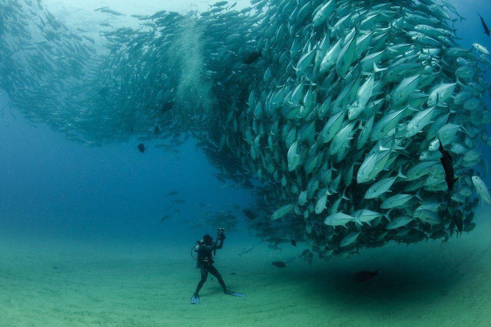 A school of fish, a photo by Aburto