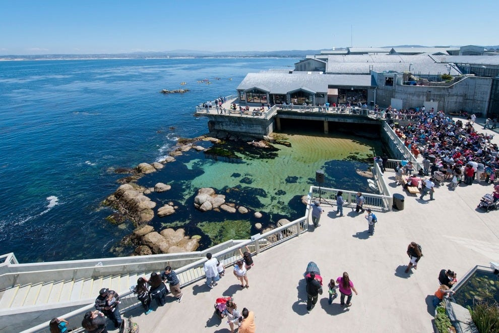 10best readers 39 choice winners best aquarium family for Pool show monterey