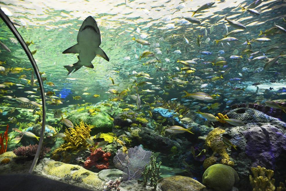 Ripley's Aquarium Is Now in Toronto, Believe It or Not ...