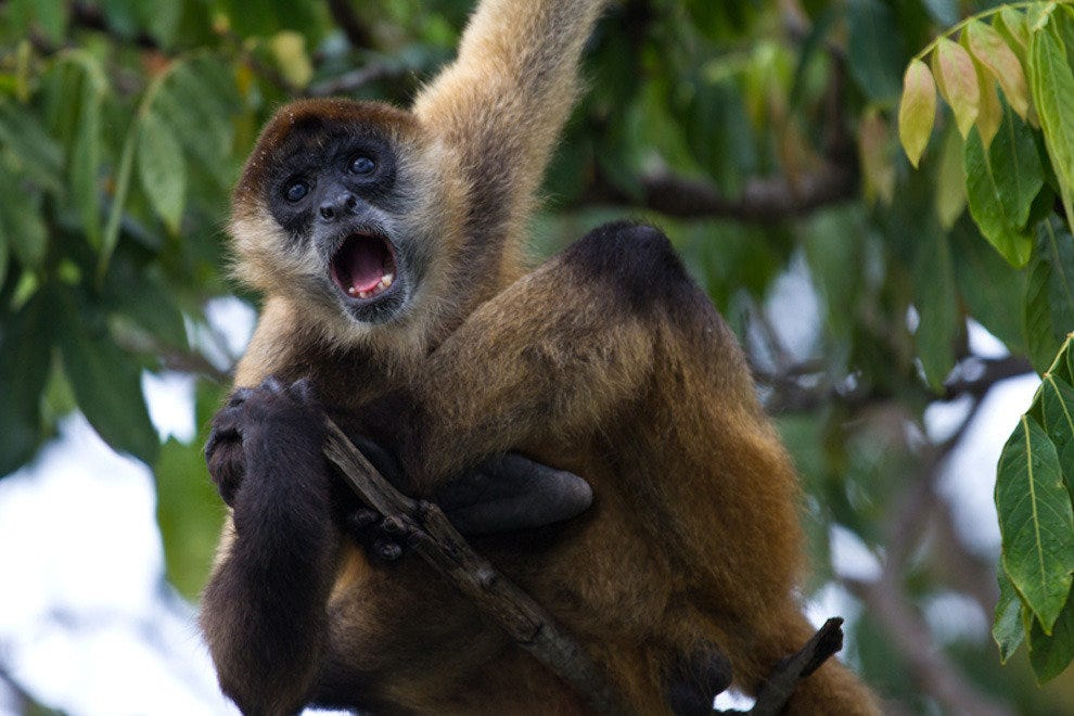 Nashville Zoo will soon include spider monkeys
