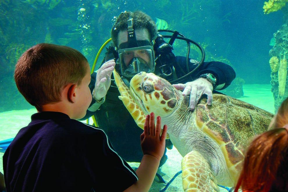 Newport aquarium cincinnati attractions review 10best for Aquarium botanic