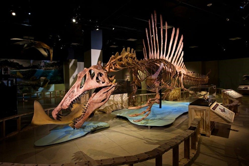 National Geographic Best Photos Exhibit Museum Of Natural History
