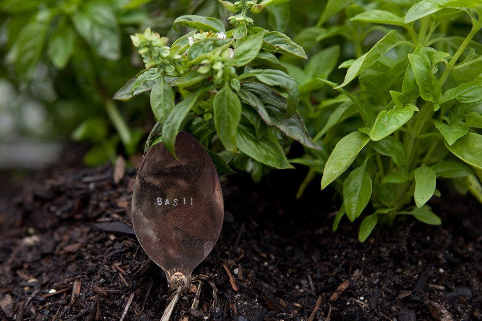 Basil grown in the garden comes to your plate freshly picked from one floor up!