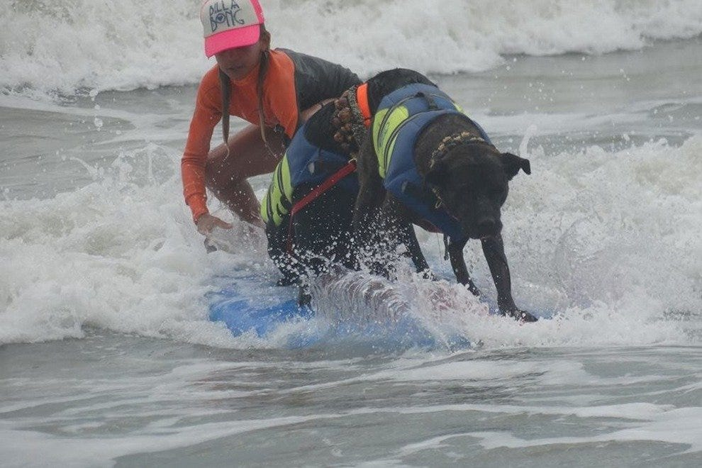 佛罗里达国际狗冲浪锦标赛