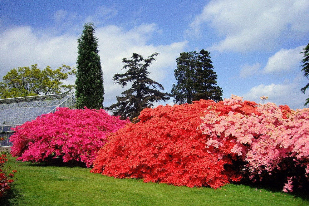 Leonardslee Gardens in West Sussex