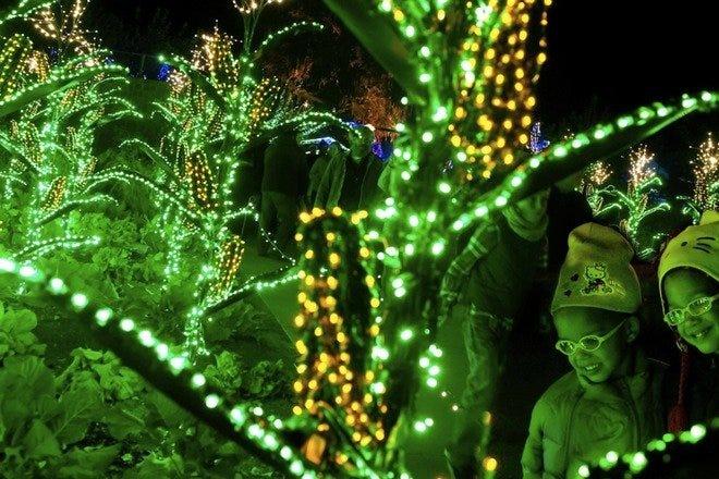 Garden Lights Holiday Nights At Atlanta Botanical Garden Best Attractions In Atlanta