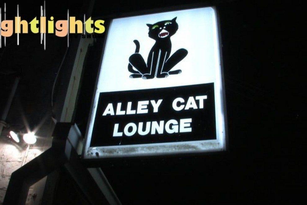 胡同猫休息室