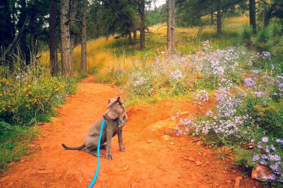 Dog-friendly trails await at Boulder's NCAR
