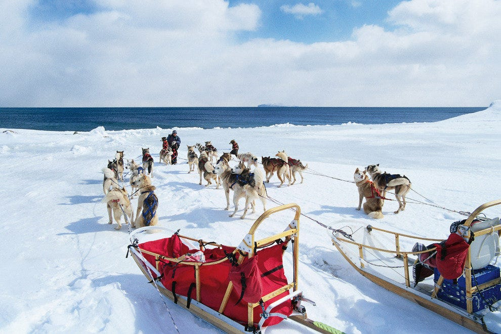 Learn to drive a sled dog team yourself on a shore excursion out of Skagway, Alaska, with Celebrity Cruises.