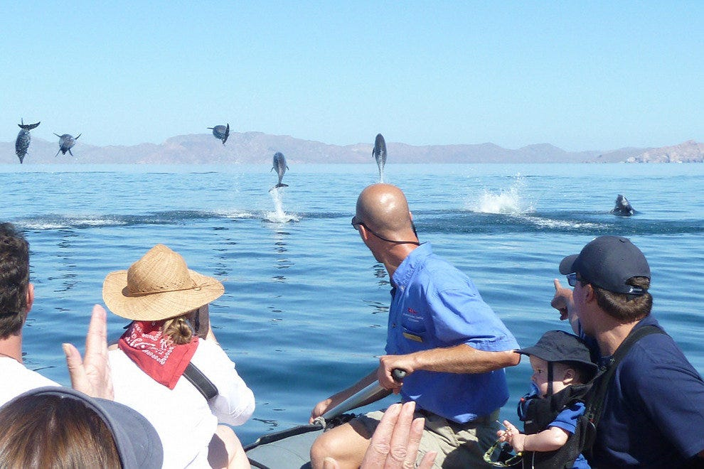 The Sea of Cortez is a winter home to thousands of gray whales, dolphins, killer whales and other marine mammals.