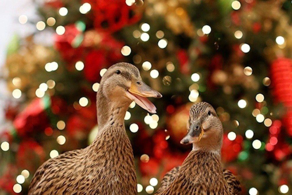 皮博迪酒店的圣诞节