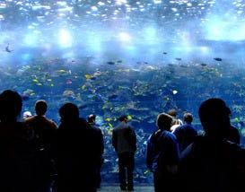 Best Atlanta Attractions And Activities Top 10best