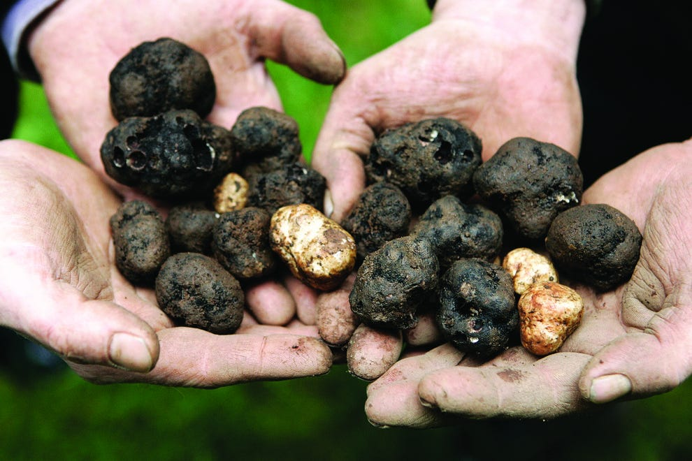 Learn how to grow truffles at the Oregon Truffle Festival