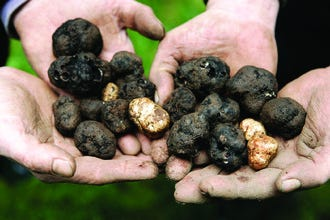 Annual Oregon Truffle Festival Expands to Portland