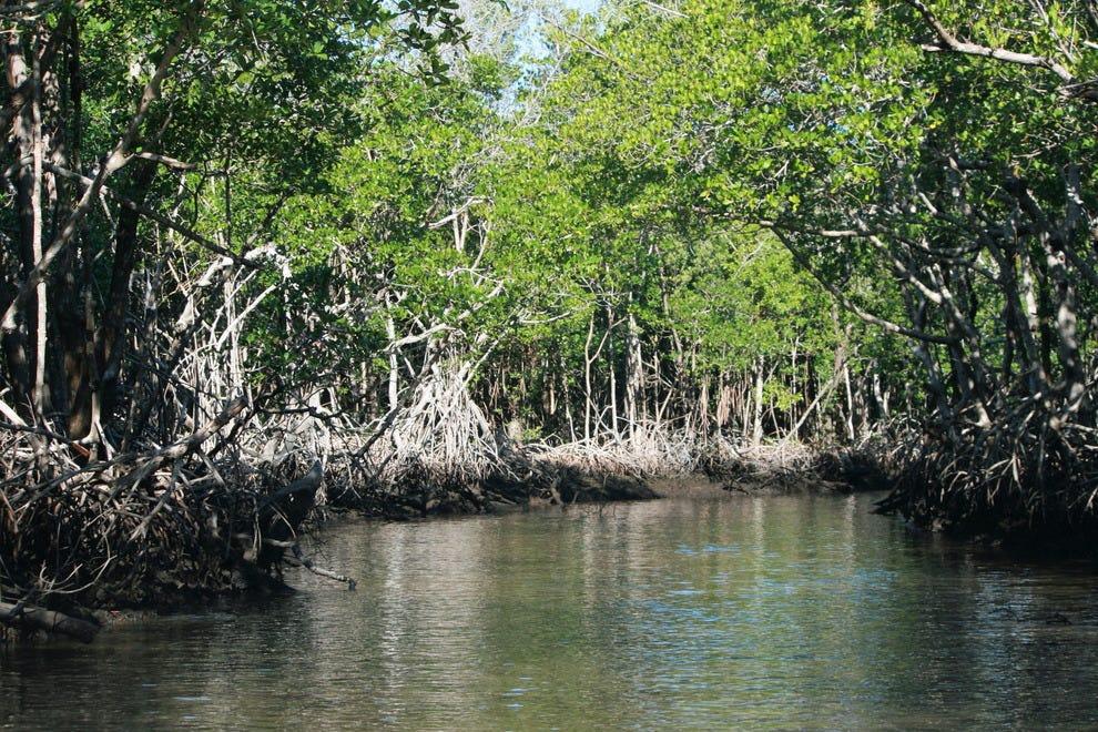 湿地国家公园红树林河口
