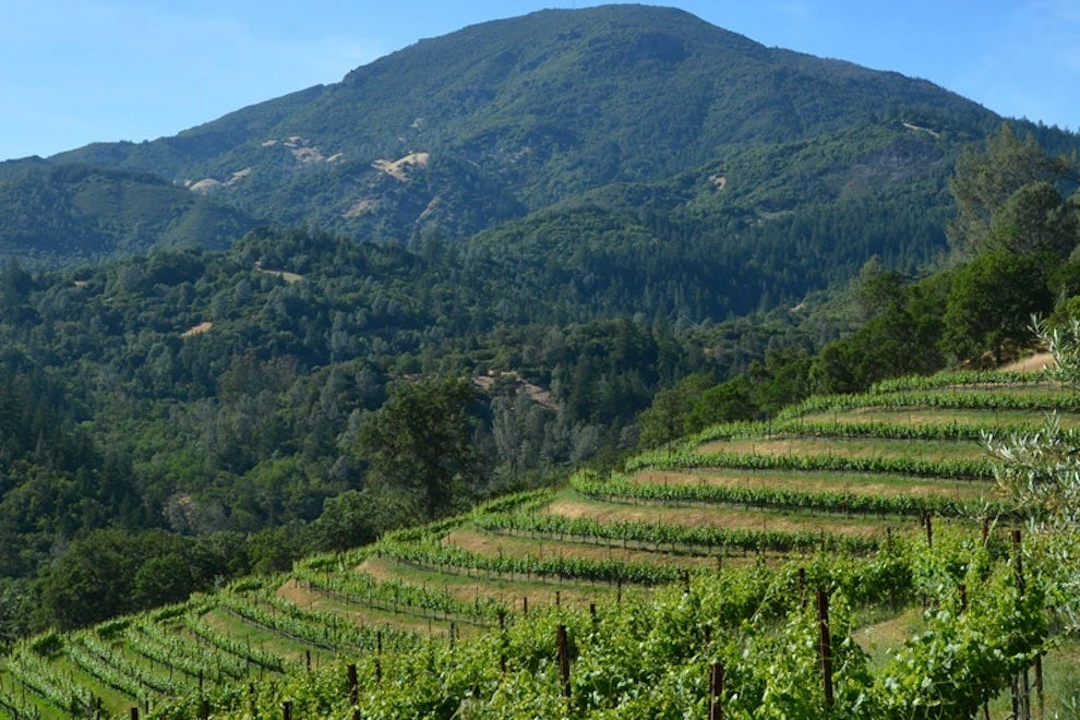Mount Saint Helena looms behind Jericho Canyon Vineyard