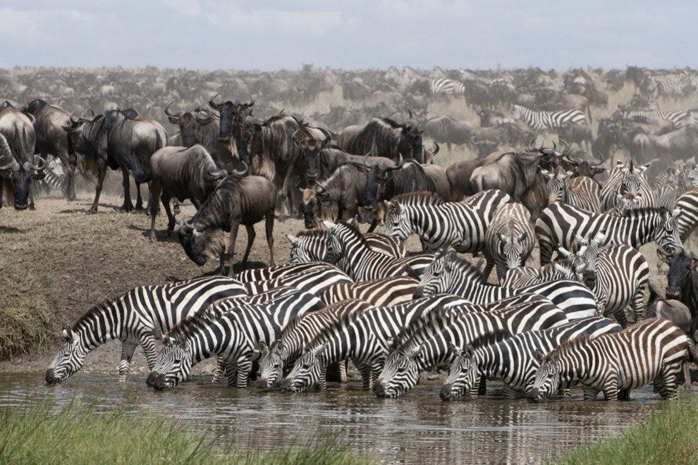 Great animal migrations (and where to see them!)