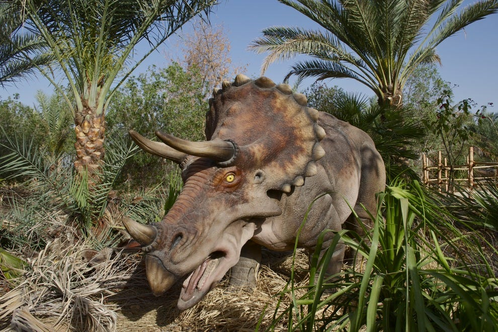 Triceratops is among one of the many dinosaurs you'll get to meet at Zoo Miami