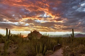 Romancing the Desert: 10 Best Romantic Things to Do in Phoenix
