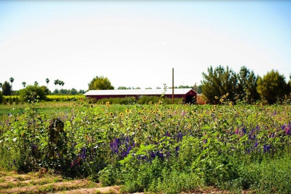 Schnepf Farms: Phoenix Attractions Review