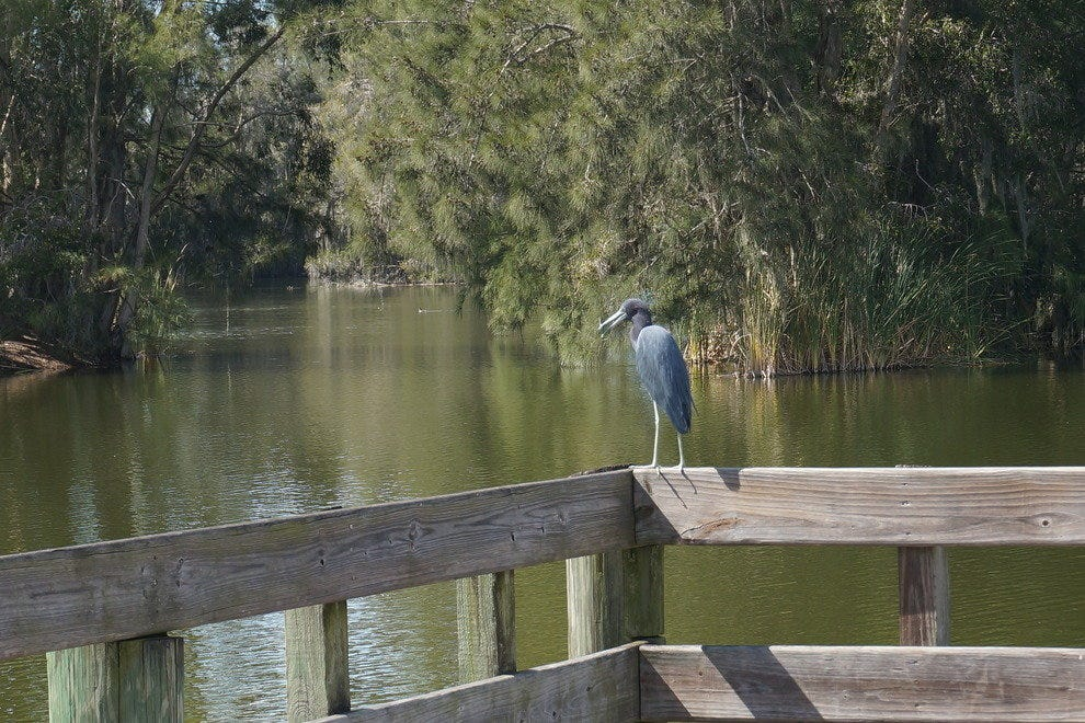 Birds and other wildlife find a warm home at Lakes Park