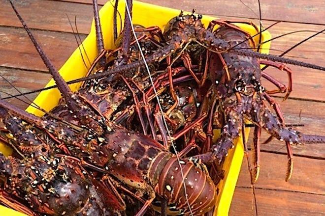 Seafood in Aruba