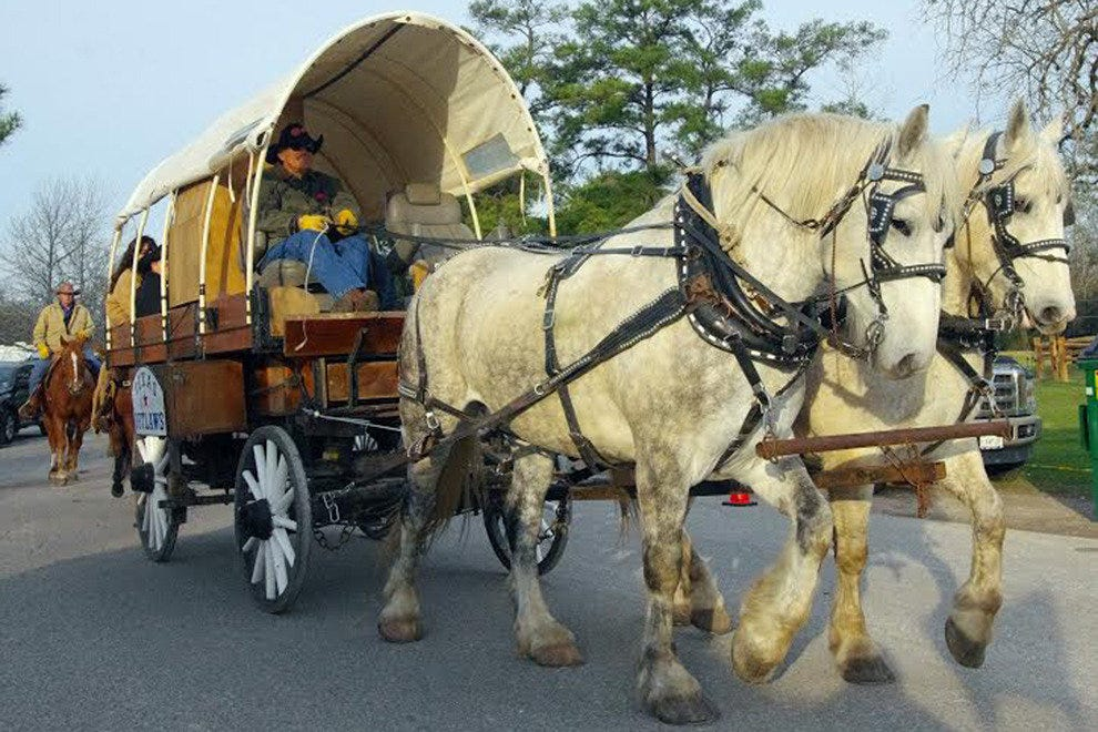 Yes, those are horses and covered wagons making their way around Houston. It's the ultimate sign it's time to rodeo.