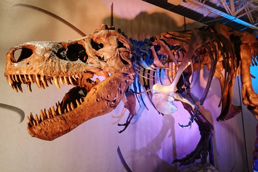 "Sue is often called a ""she,"" but in fact its sex is unknown; scientists still cannot tell T. rex males from females"