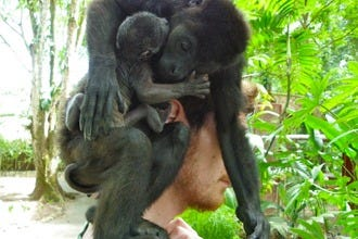 Baby Howler, Capuchin Monkeys Arrive at Jaguar Rescue Center