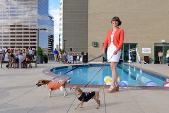 Hotels In Denver That Welcome Your Four Footed Friends Too