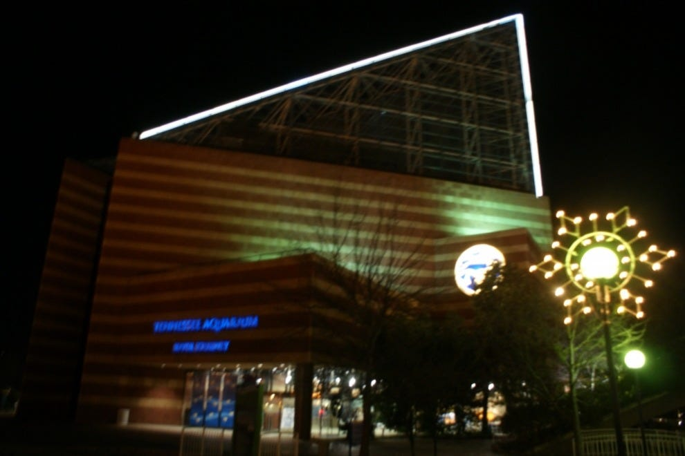 Tennessee Aquarium Chattanooga Attractions Review