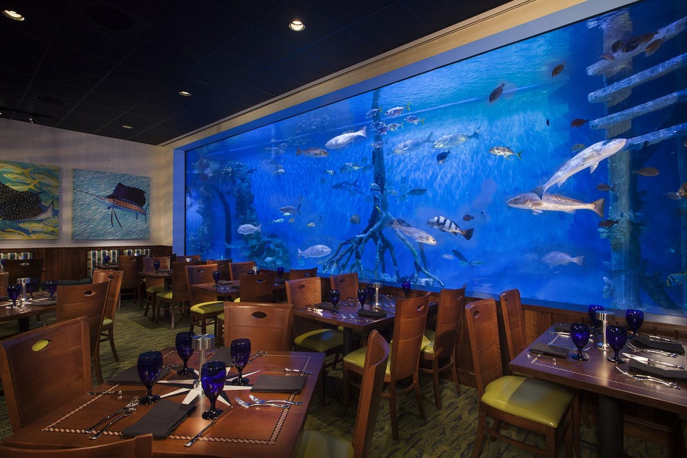 The saltwater-themed restaurant features a number of aquariums