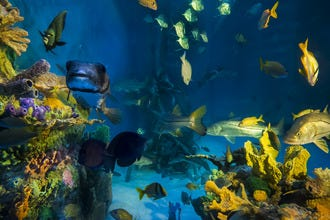 Swim with the Fishes at Guy Harvey RumFish Grill & Bar