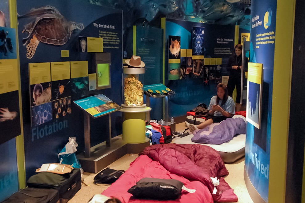 Image result for smithsonian sleepover