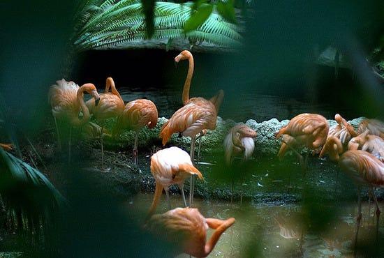 Dallas World Aquarium Dallas Attractions Review 10best