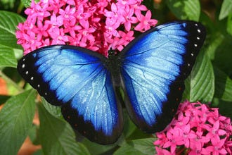 Butterfly World: An Up-Close and Personal Experience with Nature