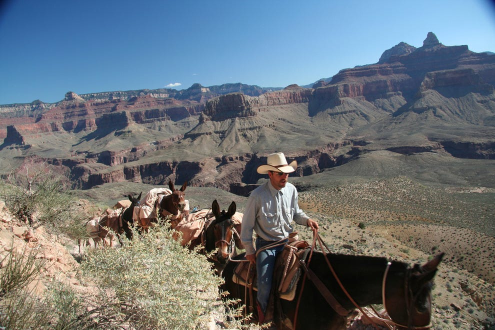 Mule riding at the Grand Canyon