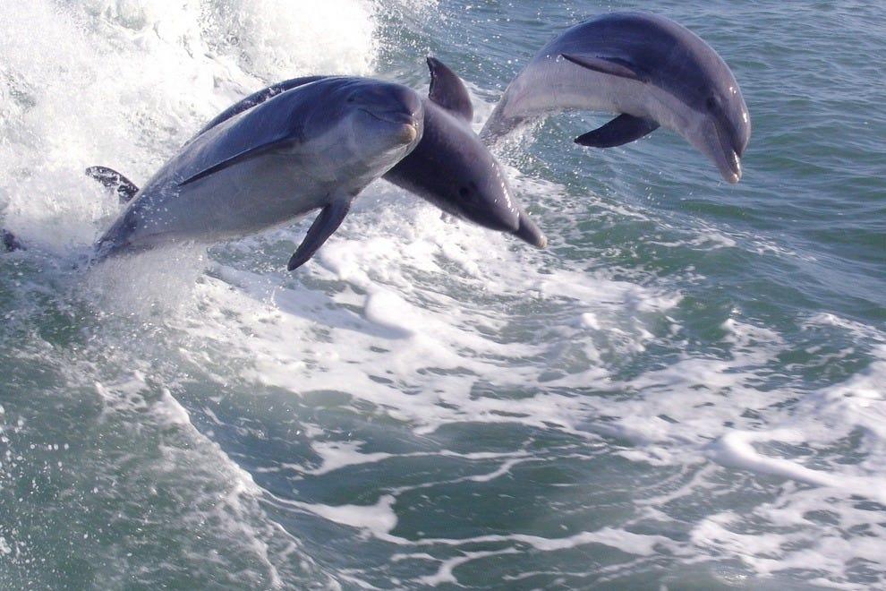 看到海豚在它们的自然栖息地