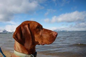 10家宠物友好型酒店,塔霍湖的客栈和小木屋