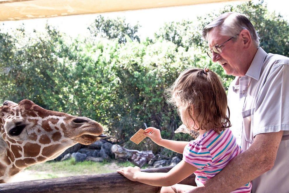 Visitors feed a giraffe at Brevard Zoo