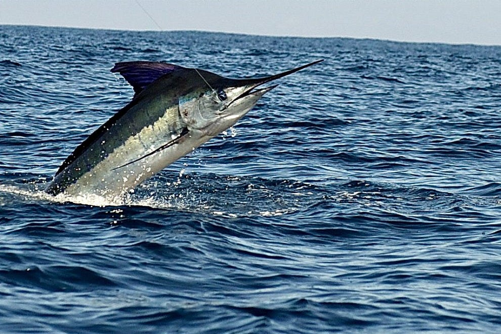 Pisces sportfishing fleet cabo san lucas attractions for Pisces fishing cabo