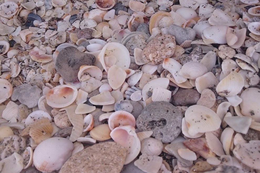 Low tide reveals Neptune's treasure box, a rainbow of beautiful shells for collecting