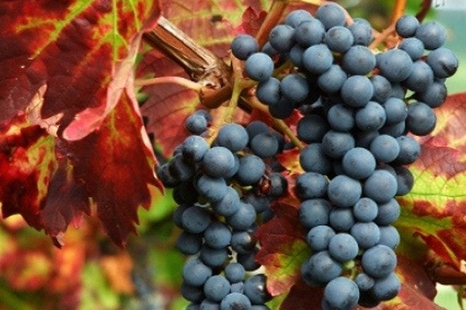 Wine Tasting Tours in Florence