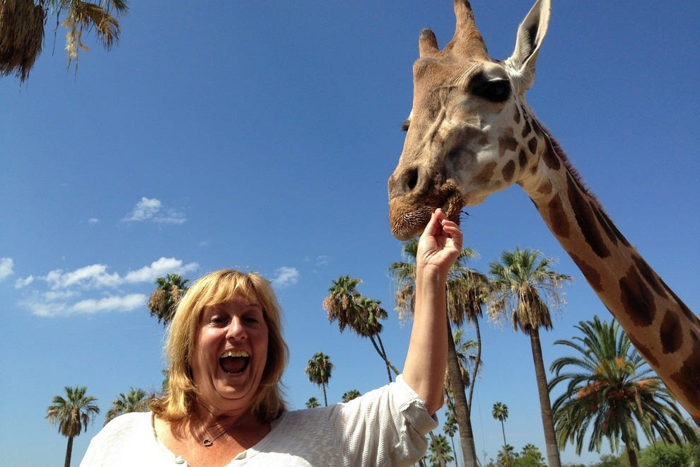 Feeding giraffes at the San Diego Zoo Safari Park