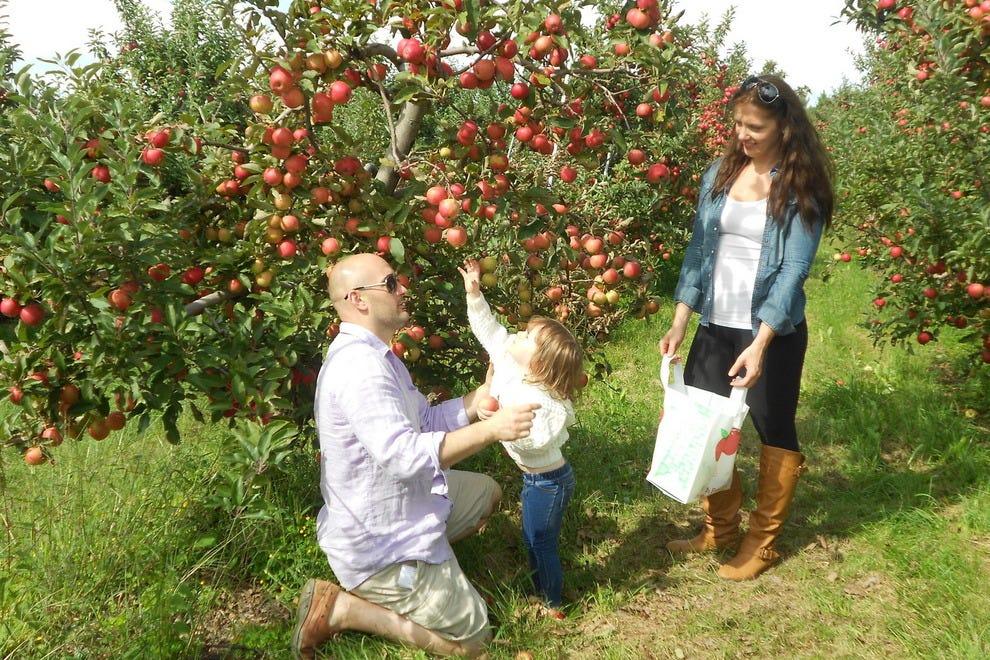 apple orchard. alyson\u0027s orchard walpole, n.h. apple