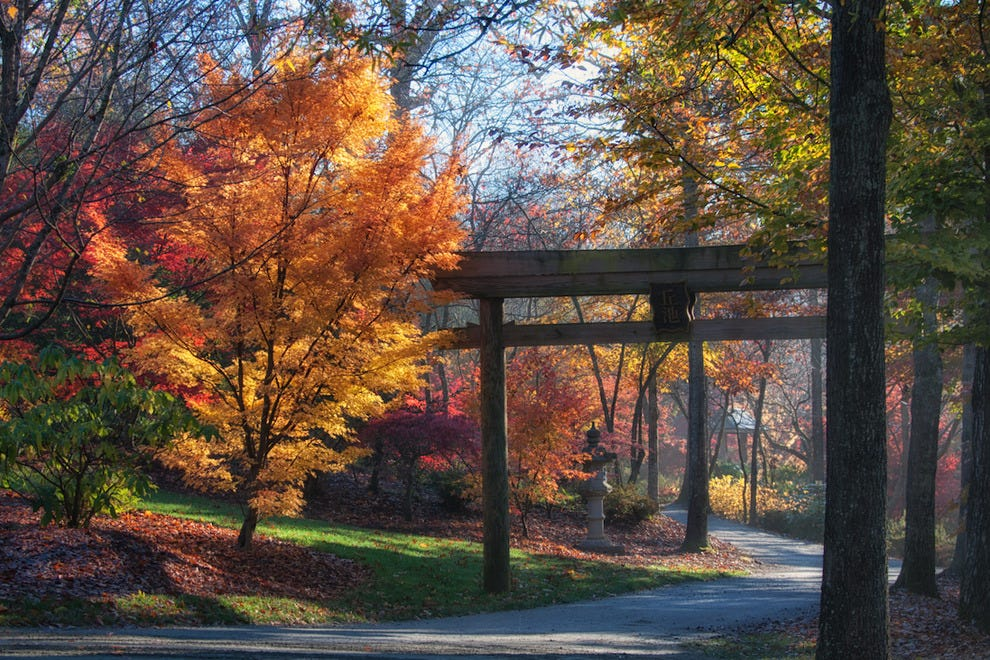 Torii gate in Fall