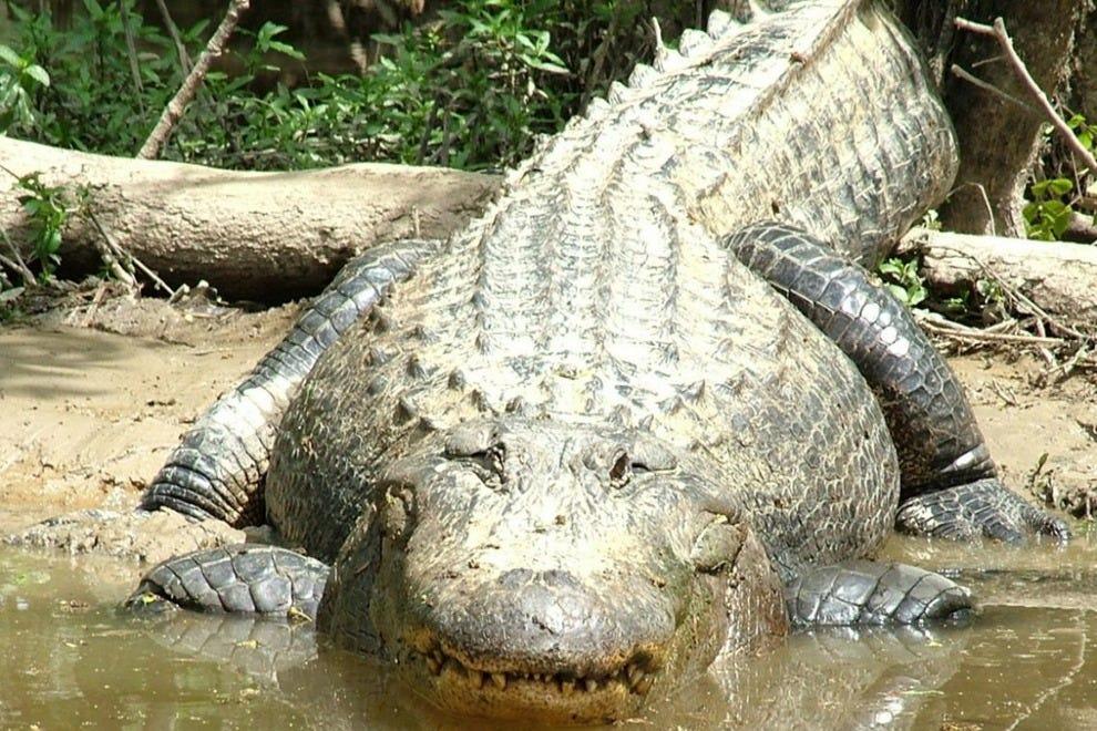 Best Alligator Restaurant New Orleans